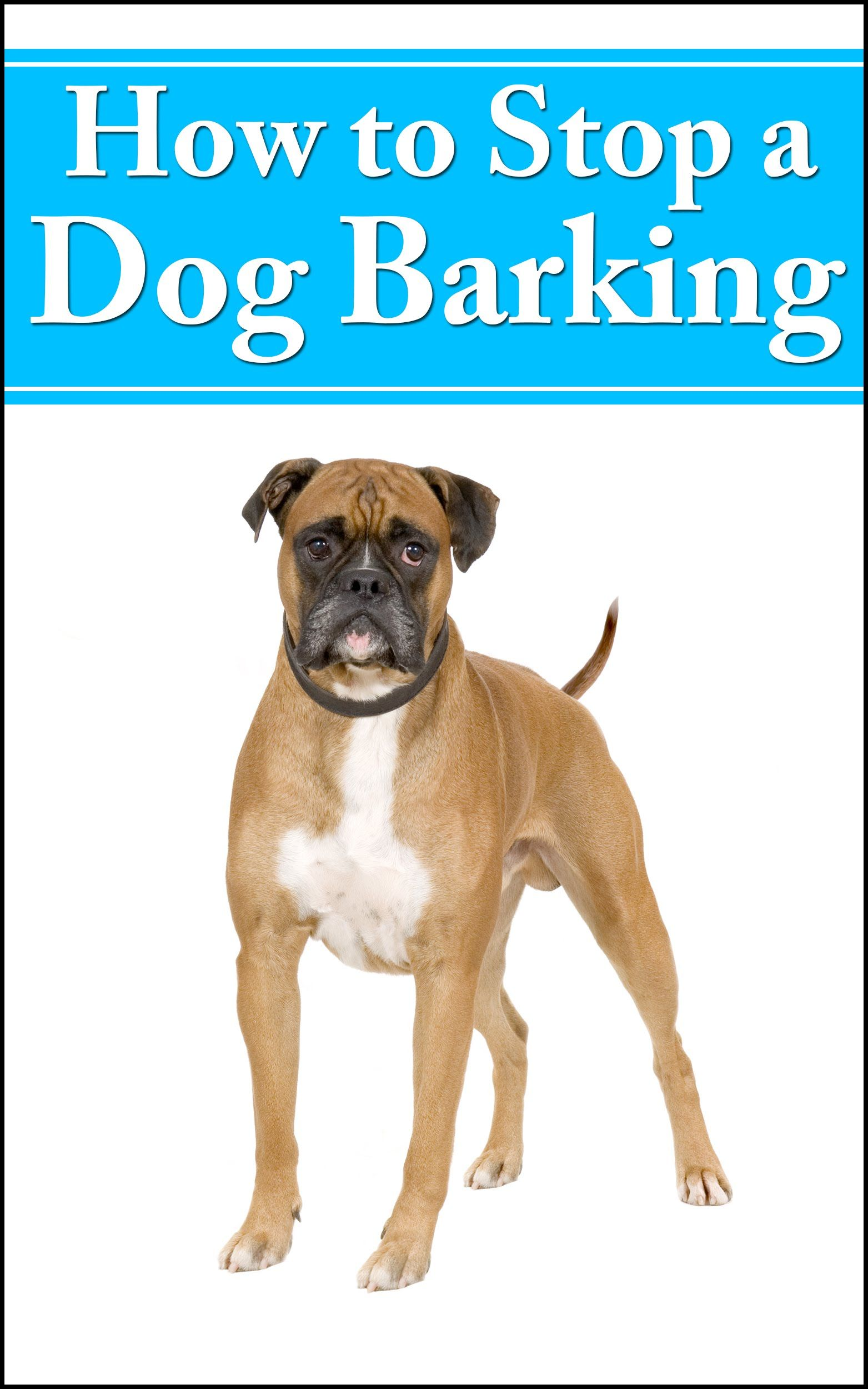 Learn how to stop a dog barking Try this great methods