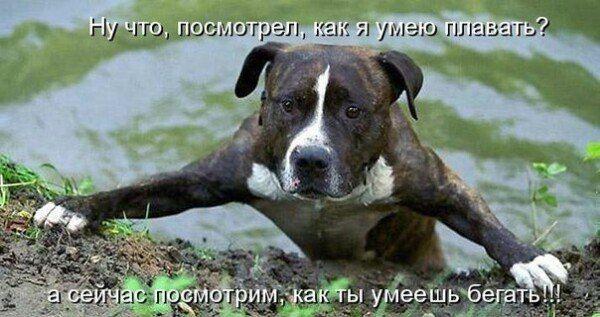 Пин от пользователя Katiasko _ на доске Собаки | Собаки ...