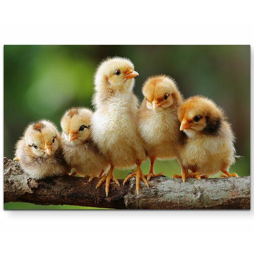 East Urban Home 5 Sweet Chicks Close Up Photographic Print on Canvas | Wayfair.co.uk
