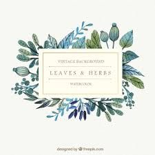 lavender vector free - Google 검색