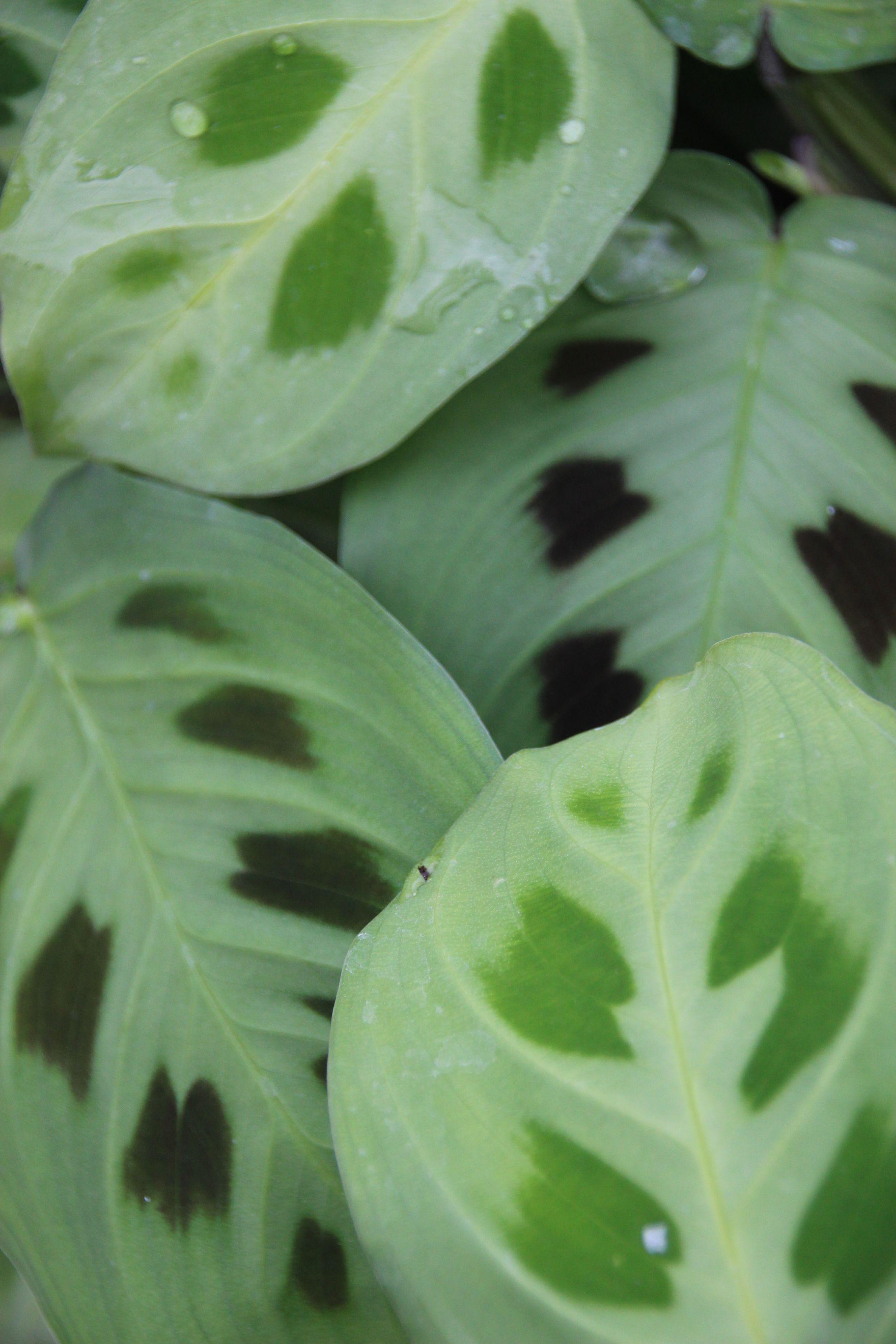 Tropical Plants By Terra Plants Growing Herbs Indoors 400 x 300