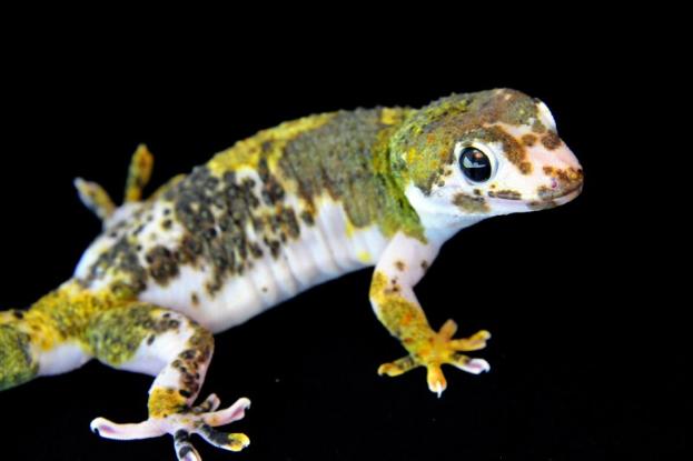 Pin On Reptiles