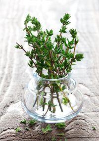 Para além de ser utilizada na cozinha, o tomilho pode ser usado como remédio caseiro :) #plantar #horta #tomilho