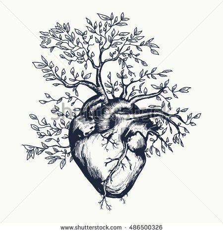 Photo of Anatomisches menschliches Herz, aus dem der Stock-Vektorgrafik (Lizenzfrei) 424227829