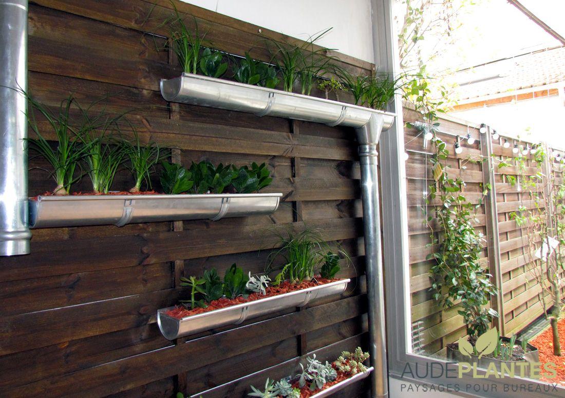 Mur Végétal Extérieur Palette aude plantes végétalise casaco - malakoff | mur végétal