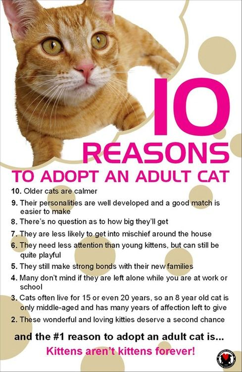 Ten reasons to adopt an adult cat! Please pass this on, 8yr+ & black cats are the slowest to adopt out!