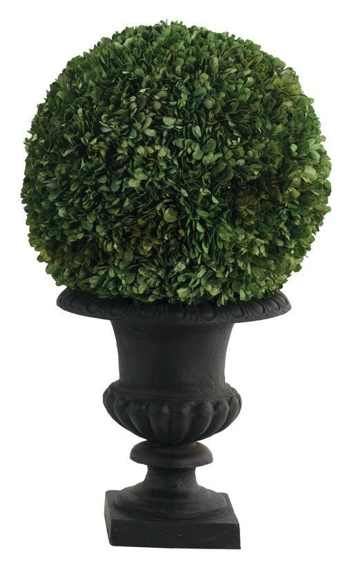 Natural Decorations Inc Boxwood Natural Preserved