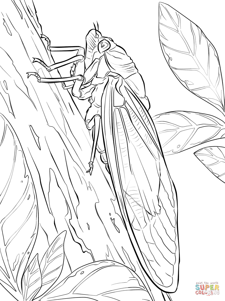 Cicada Coloring Pages