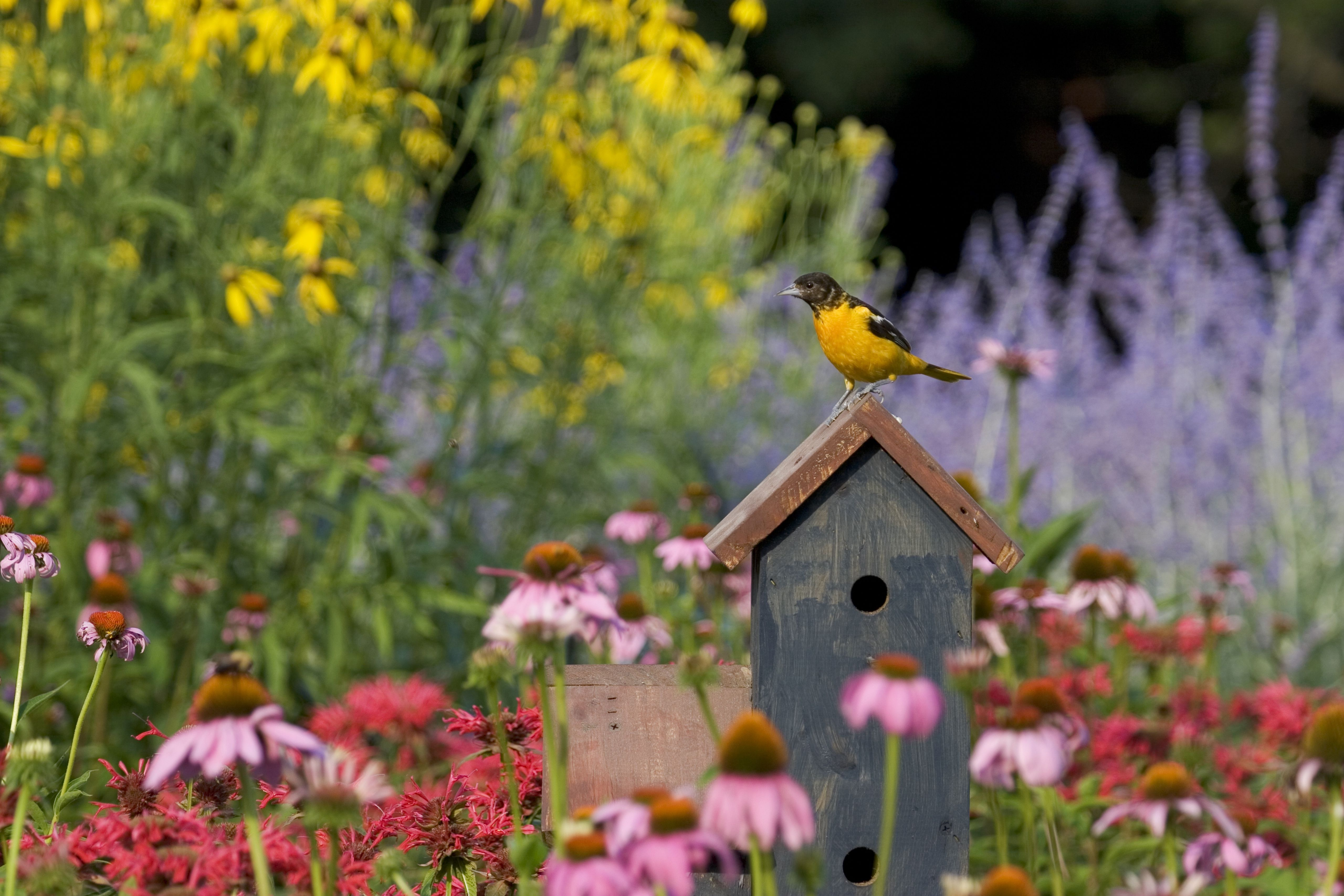 Seven Easy Ways to Attract More Birds to Your Backyard in ...