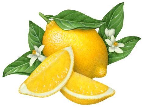 Pin On Lemon Lime And Grapefruit Illustrations