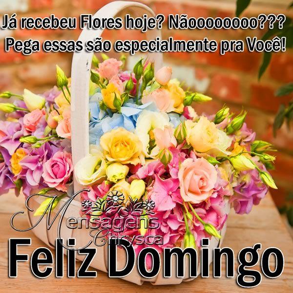 Já Recebei Flores Hoje Não Pega Essas São Feliz Happy