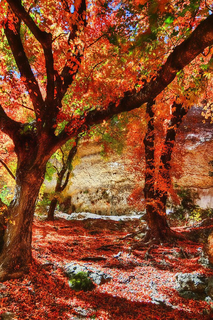 Lost Maples State Park in Texas   Paisajes, Pintura al ...