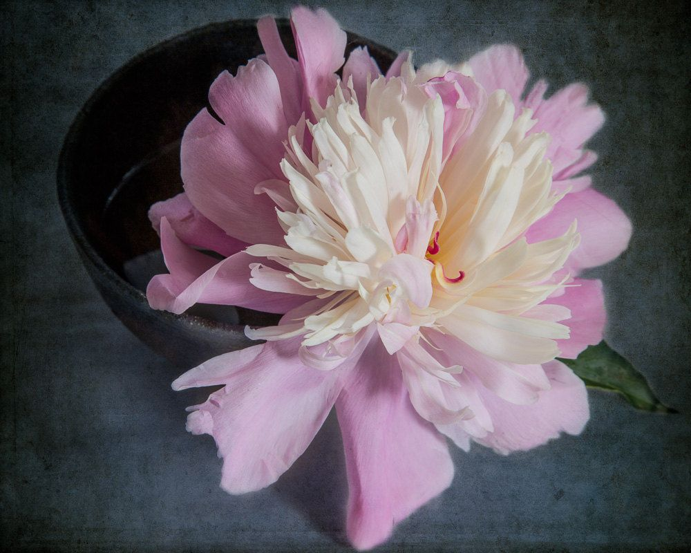 Dramatic Pink Peony Print, Pink Peony Photograph, Flower Print, Botanical Print, Floral Wall Decor, Bedroom Wall Art, Flower Still Life by ChasedByBeauty on Etsy