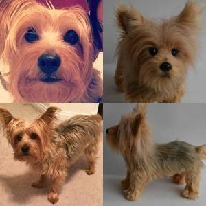Custom Silky Terrier Stuffed Animal Plush Yorkies Pinterest