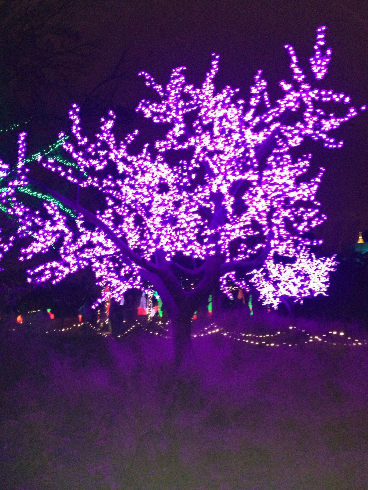 Atlanta Botanical Garden cherry blossom lights! Photo by Patricia ...