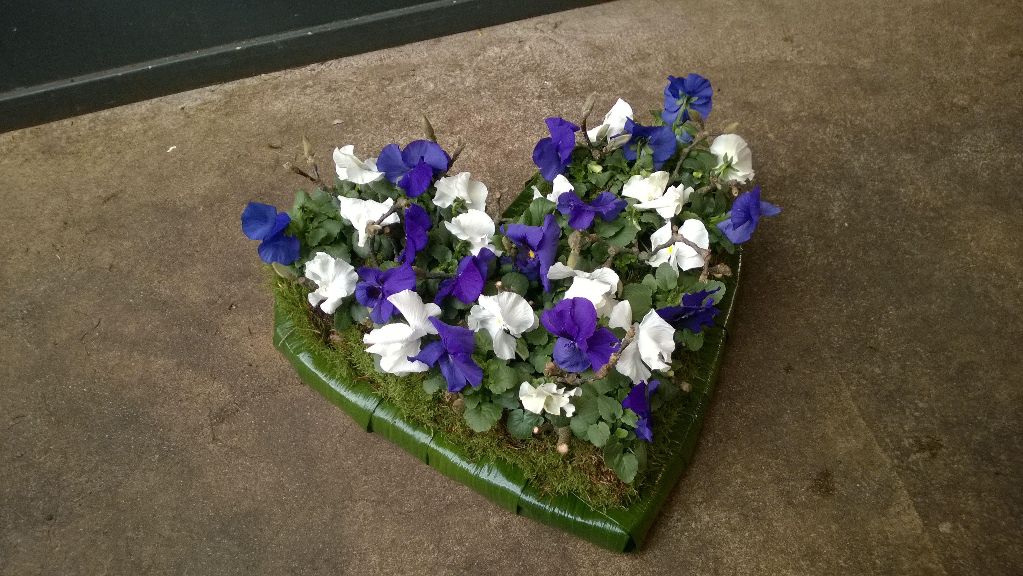 violenplantjes