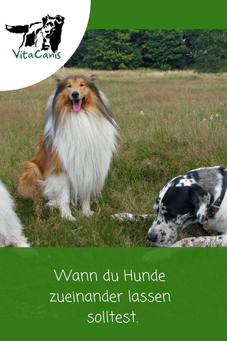 Hundekontakt Worauf Du Achten Solltest In 2020 Hunde Hundchen Training Hunde Erziehen