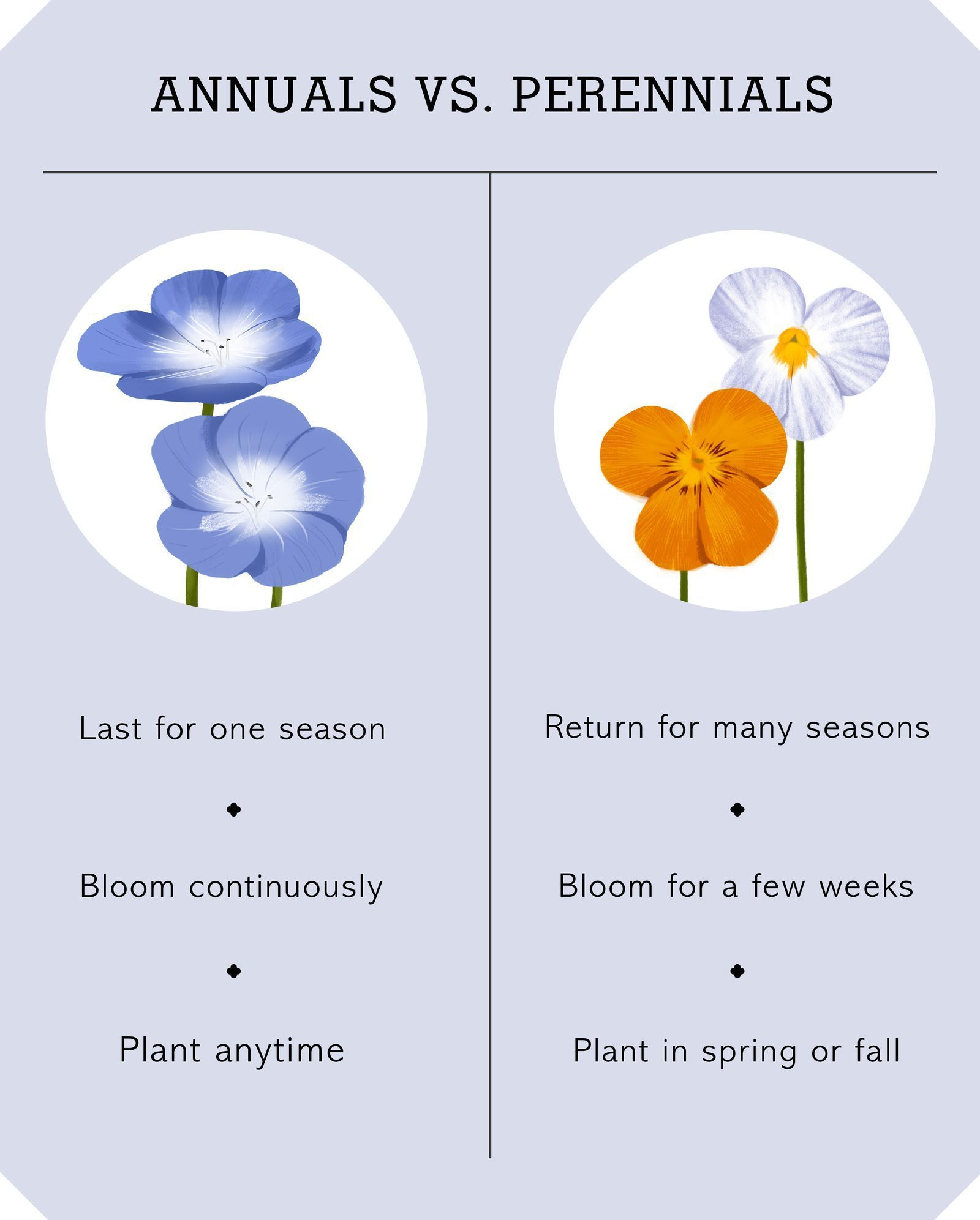 Photo of Here's How to Choose Between Annuals and Perennialscountryliving #annuals #Diffe…
