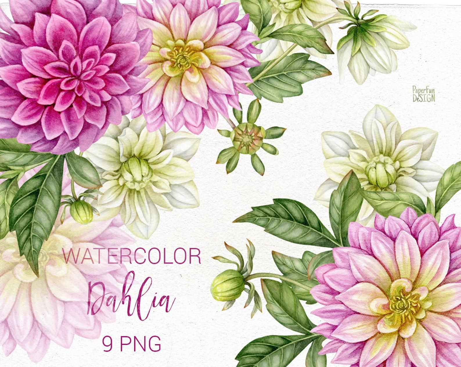 Watercolor Dahlia Flowers Buds And Leaves Clip Art Etsy In 2020 Dahlia Flower Botanical Flowers Print Dahlia