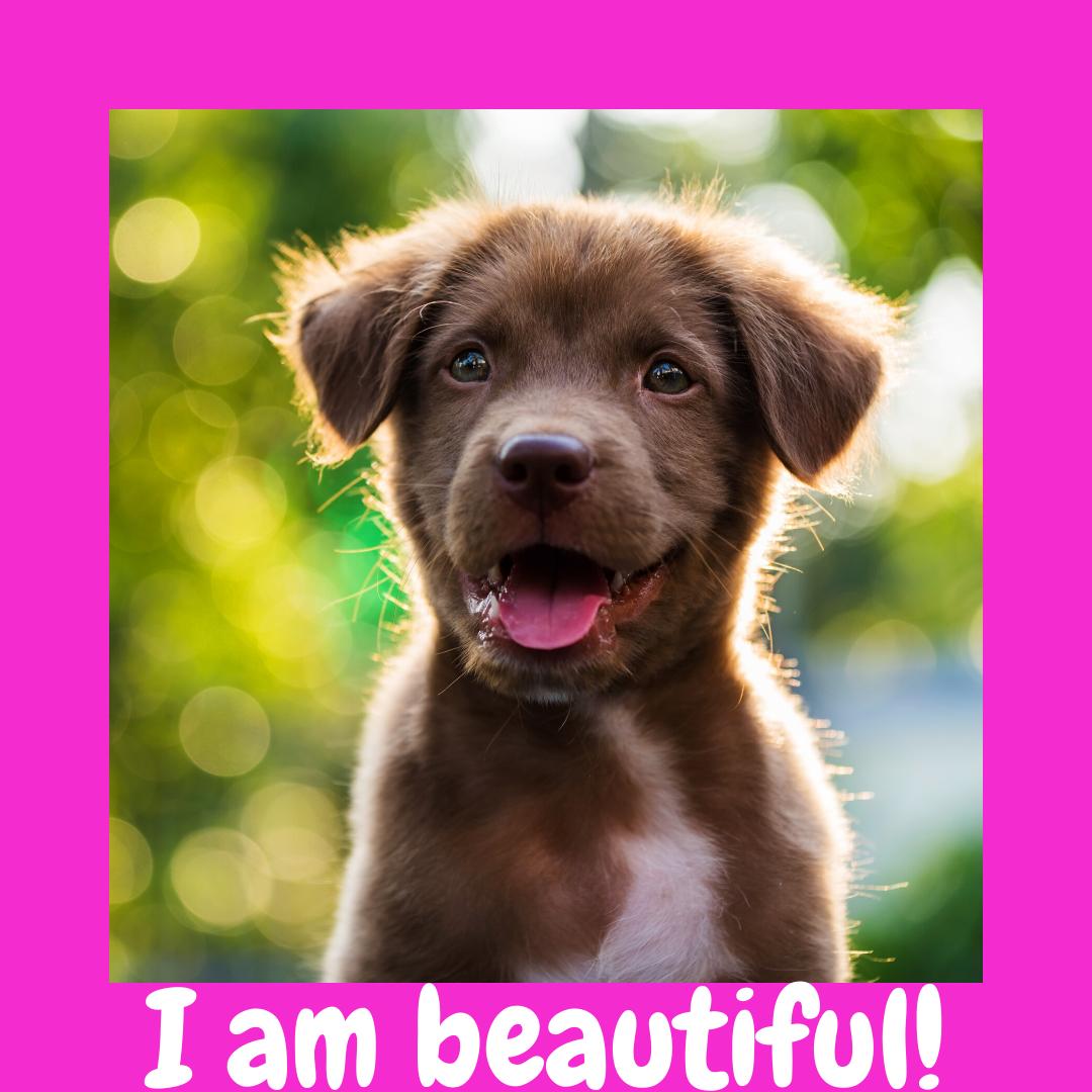 Dog Tartar Vet Dog Teeth Dog Periodontal Dog Teeth Dog Gum Dog Toothbrush Dogtooth Dog Dentist Dog Mouthwash Dog Tee In 2020 Puppy Training Dog Instagram Captions Dogs