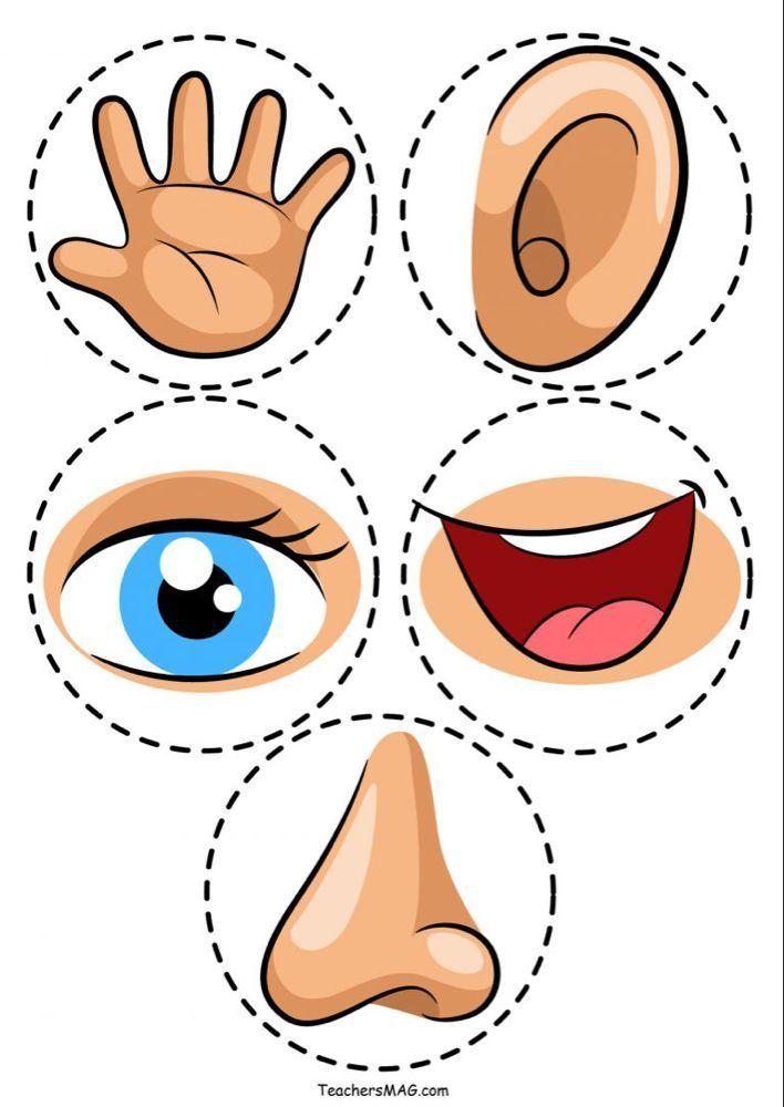 Actividad de cinco sentidos para estudiantes de preescolar en 2020 ...