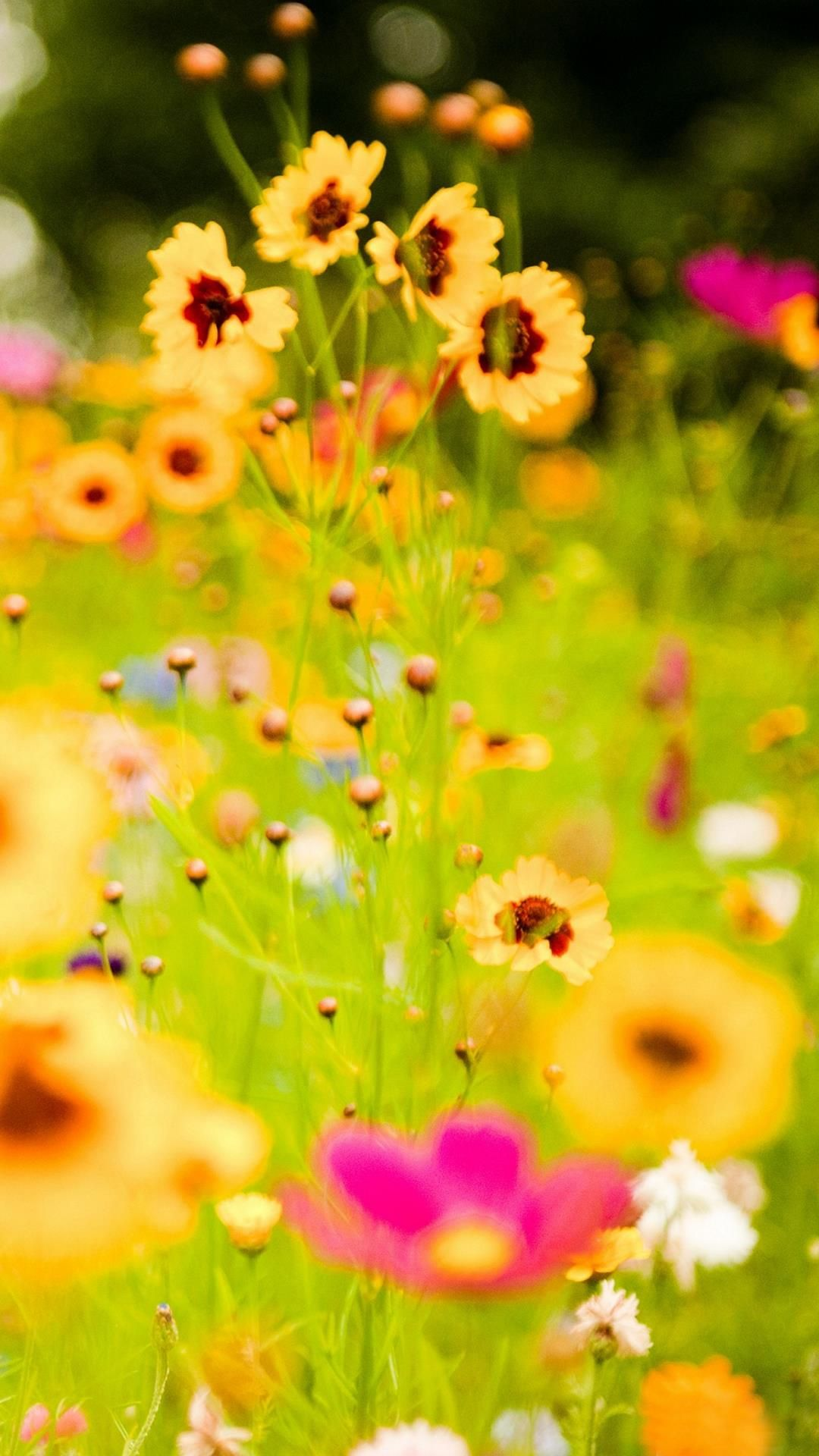 Download Samsung Galaxy S5 Wallpaper Nature 727 Wallpaper Nature Flowers Flowers Photography Love Flowers
