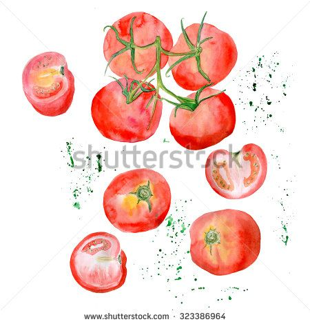 A whole tomatoes and a halves, watercolour drawing on white background