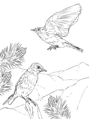 Azulejo de las Montañas Dibujo para colorear | pájaros y aves ...