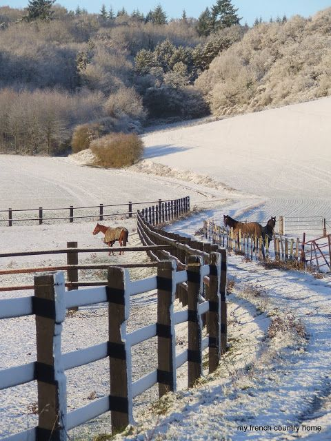 Follow Your Path| Serafini Amelia| Beautiful Horses and Snow Scene