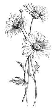 Drawn Daisy Indie Flower 10 Tattoome In 2019