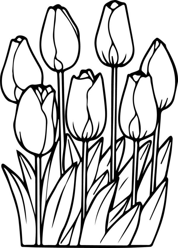 Beautiful Tulip Coloring Pages Collection Free Coloring Sheets Spring Coloring Pages Garden Coloring Pages Flower Coloring Pages