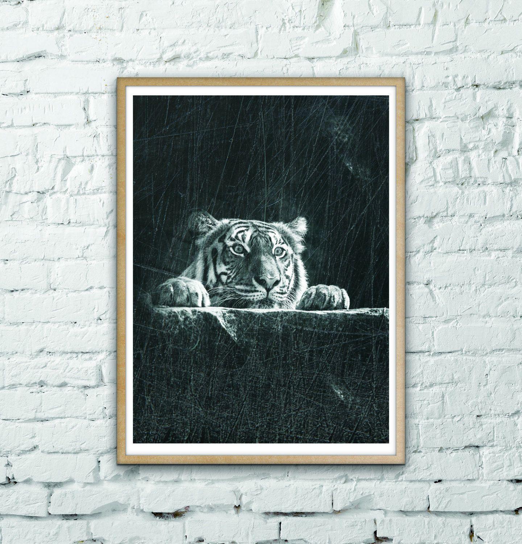 Tiger print black and white animal collection tiger peekaboo
