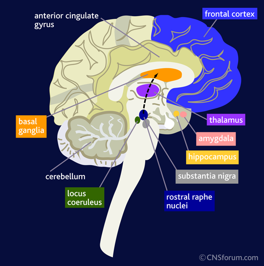 Towards a circuit diagram of the brain - Google Search | The Brain ...