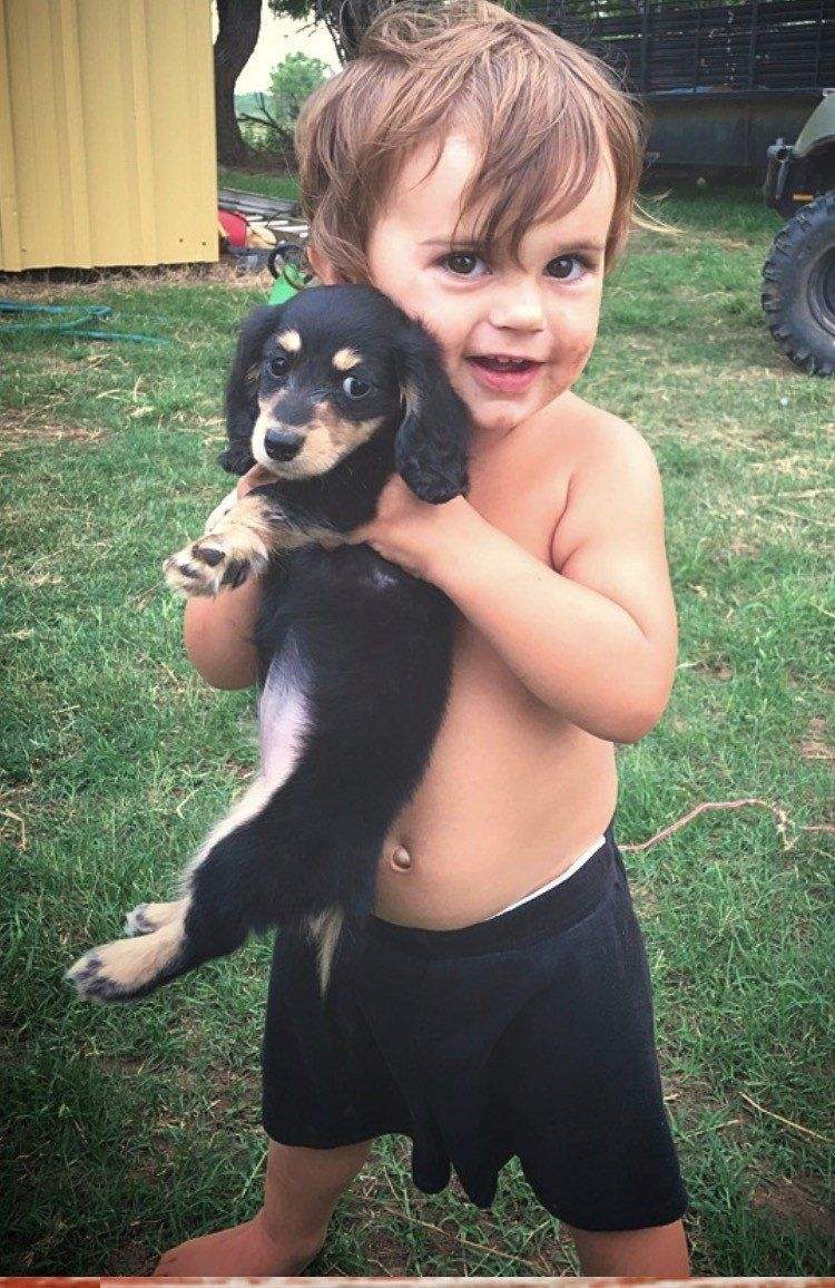 Mini Dachshund Puppies for sale in Texas Muddy River