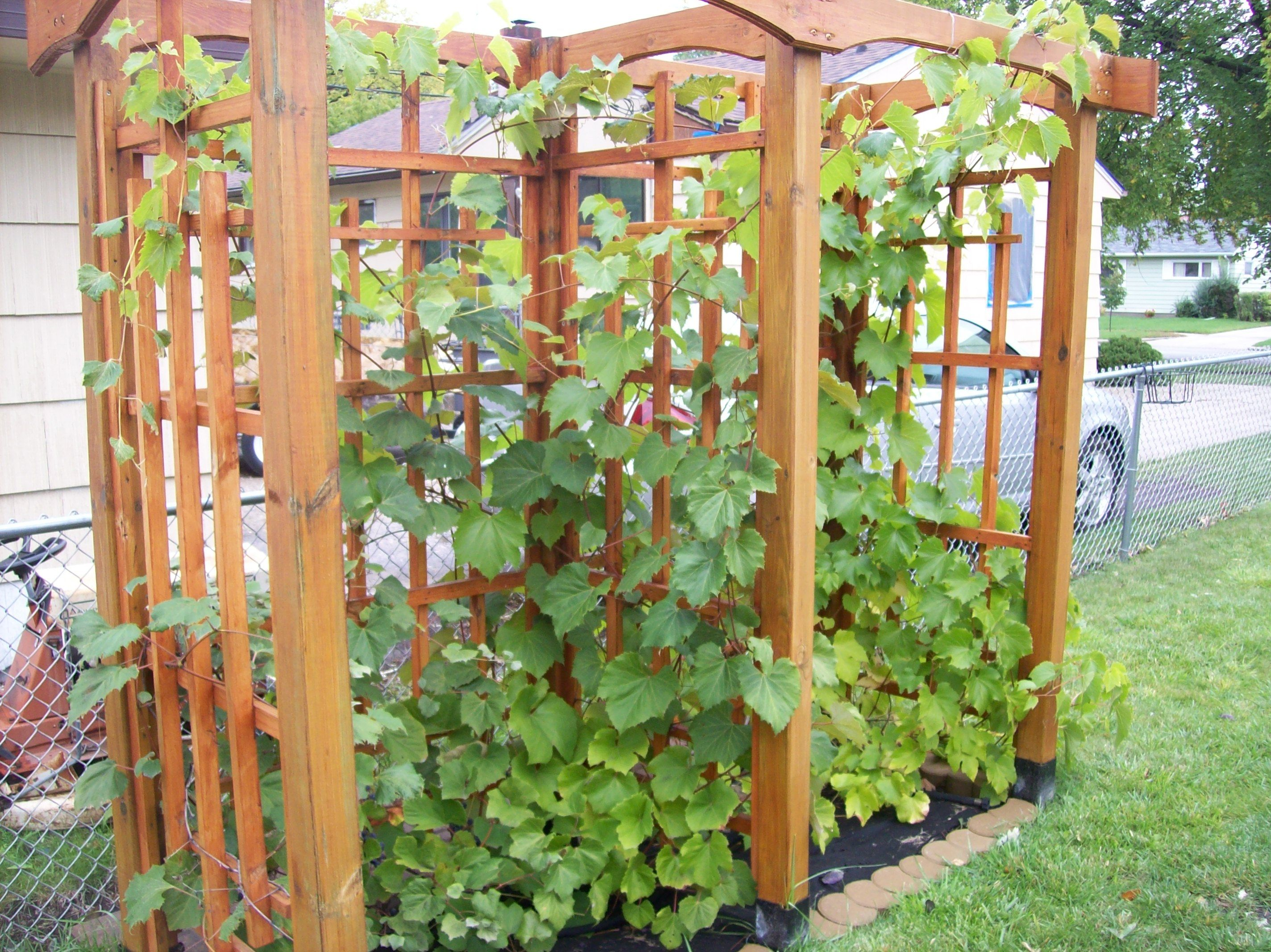 garden and one material trellis is this made trestle by feet tall wide of ideas pin
