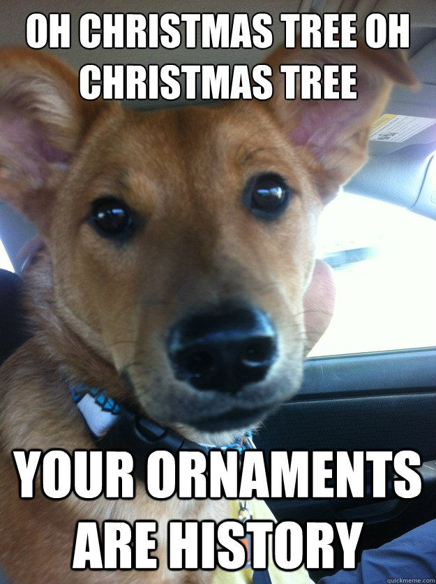 Oh Christmas Tree Oh Christmas Tree Your Ornaments Are History Funny Animal Videos Funny Animals Cute Animals