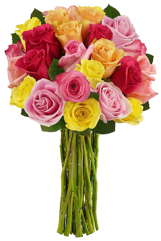 benchmark bouquets 2 dozen rainbow roses no vase remarkable product available amazon fresh