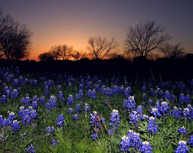 Pin By Livability On Parks Across America Beautiful Landscapes Flower Field Beautiful World
