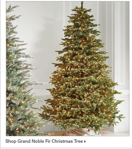 Shop Grand Noble Fir Christmas Tree Christmas Pinterest Noble
