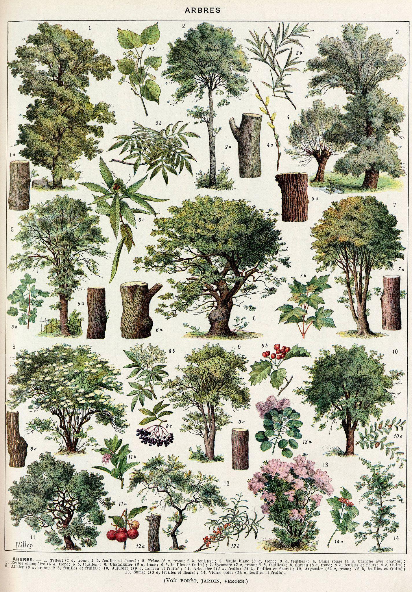 arbres-couleurs-2