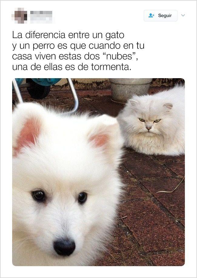 24 Tuits demuestran que la vida es MUCHO MEJOR con animales