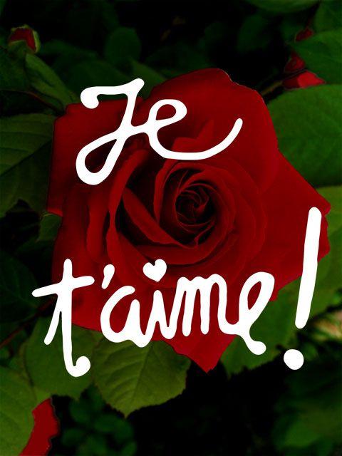Image Gratuite Pour Dire Je T Aime Je T Aime Mon Amour