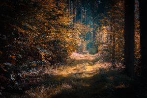 Into the next world by erynlasgalenphotoart