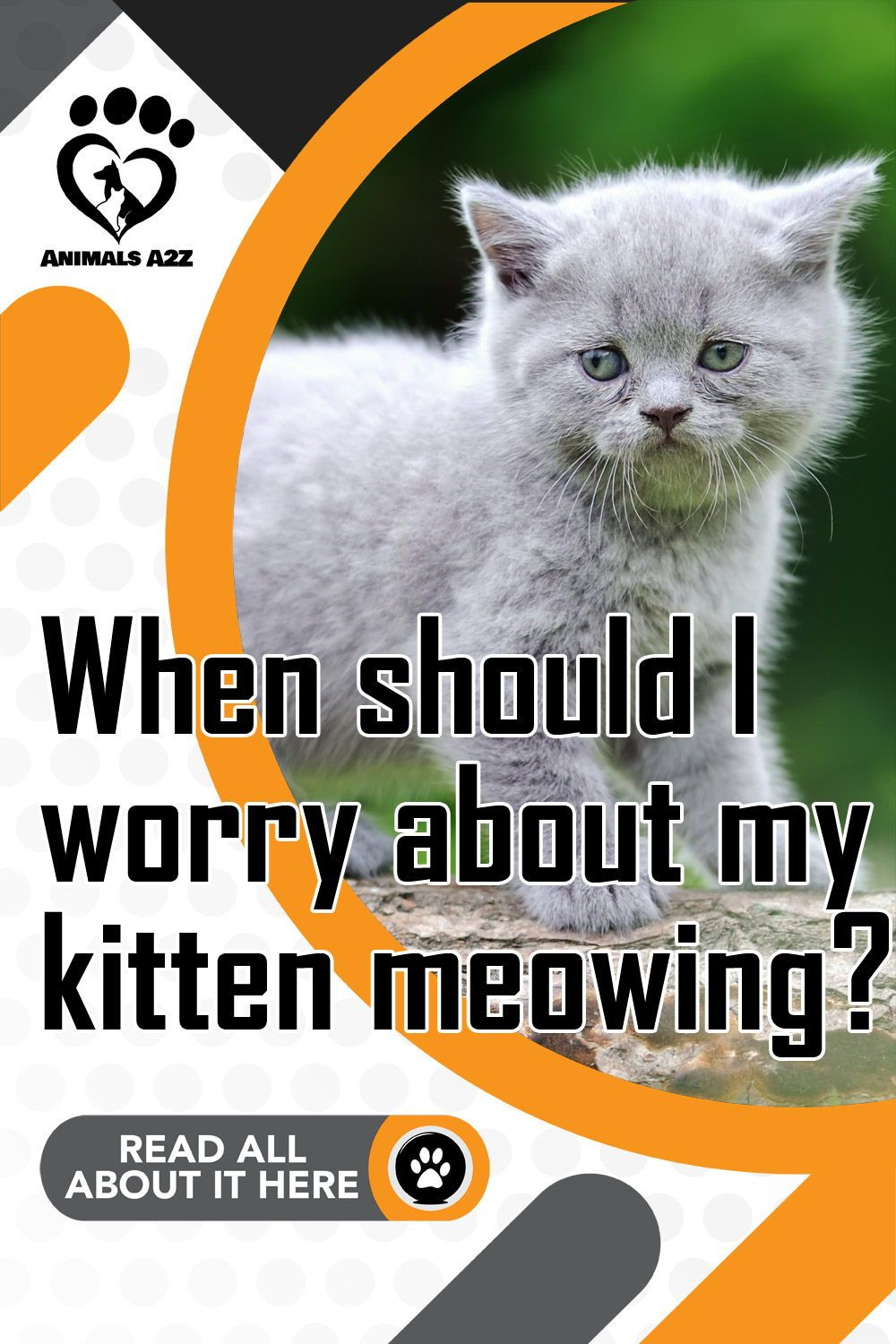 When Should I Worry About My Kitten Meowing In 2020 Kitten Meowing Kitten Kitten Care