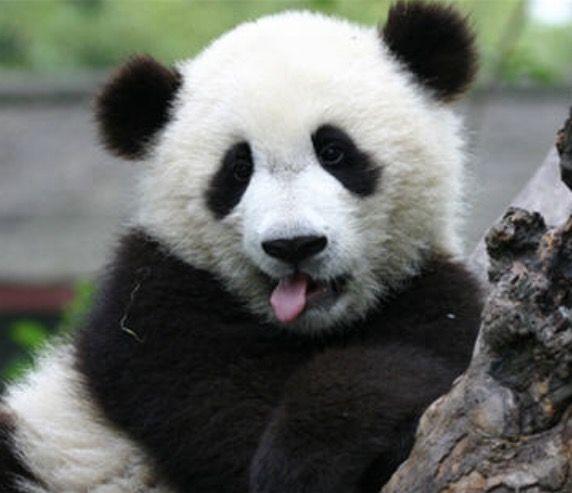 #Pandas4Life #Soccer4Life  #Art4Life
