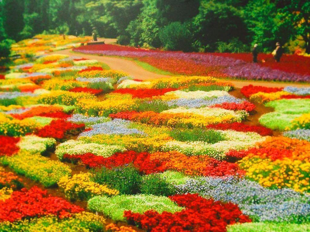 Kuju Flower Park, Tketa, Oita, Japan, くじゅう花公園, 竹田市, 大分, 日本