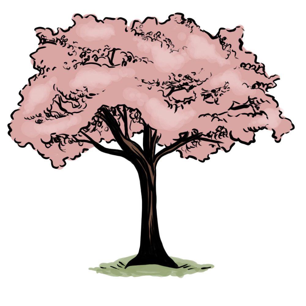 How To Draw A Cherry Tree Via Wikihow Com Blossoms Art Cherry Blossom Art Tree Drawing
