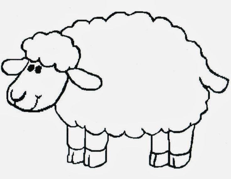 736x570 Sheep Coloring Pages Preschool Sheep Drawing Sheep