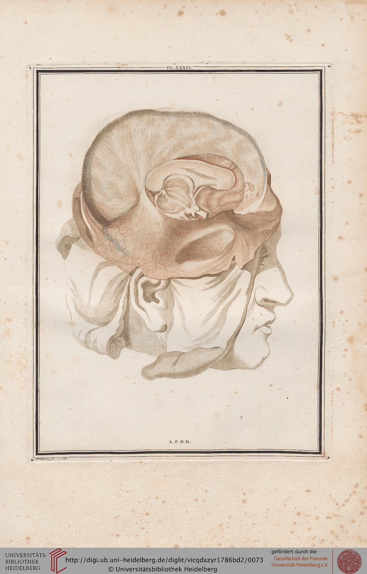 Vicq D\'Azyr, Félix: Traité d\'anatomie et de physiologie (Band 2 ...