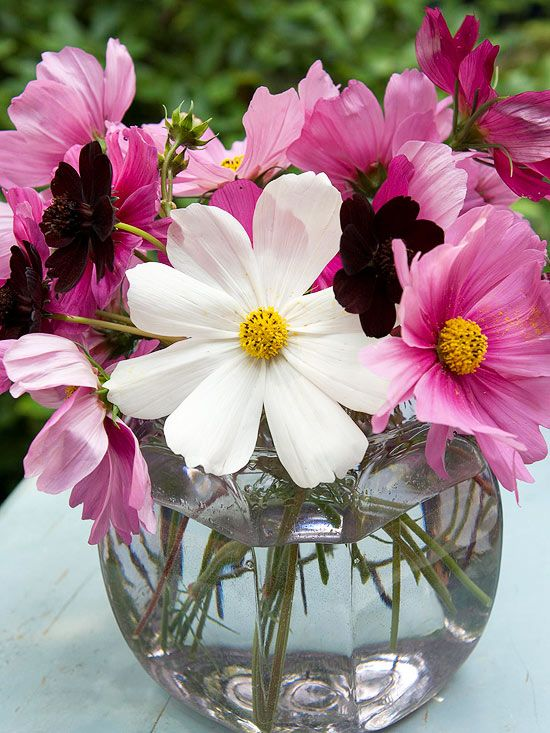 Owlfies flowers and gifts owlfiesflowers on pinterest mightylinksfo